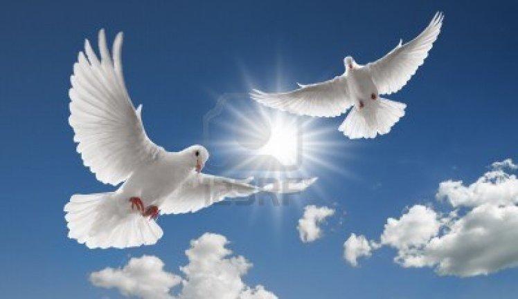 ob_0ae4e0_4621949-deux-colombes-voler-avec-des-ailes-sur-la