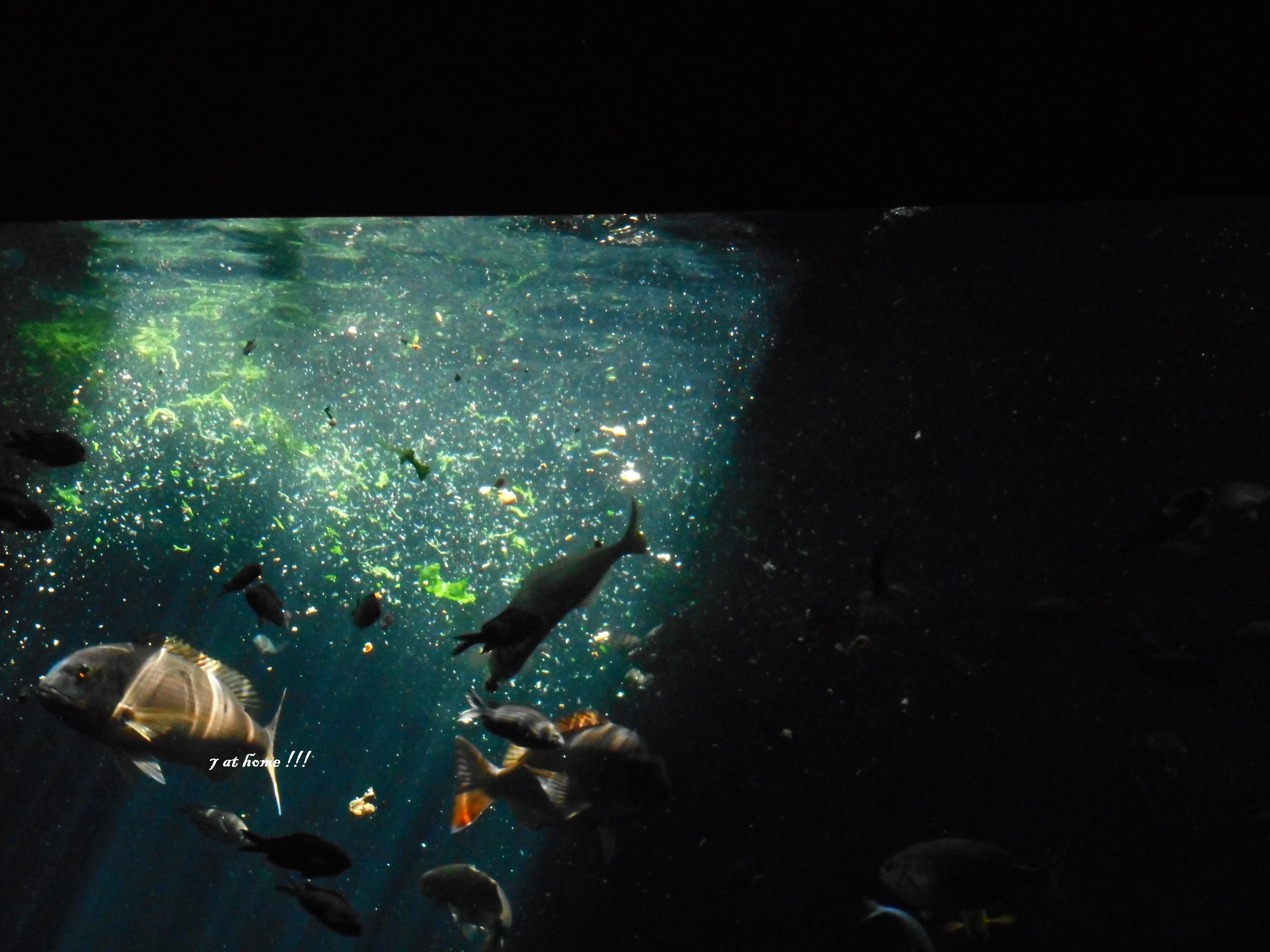 l aquarium 171 le septi 232 me continent 187 de talmont st hilaire sept 224 la maison 169 une famille