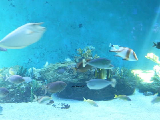 L aquarium le septi me continent de talmont st hilaire for As tu un animal a la maison